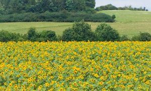 Sommer Sonne Blumen SPD Oranienburg