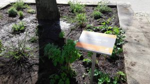 Beet SPD Oranienburg