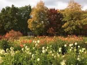 Herbst I SPD Oranienburg